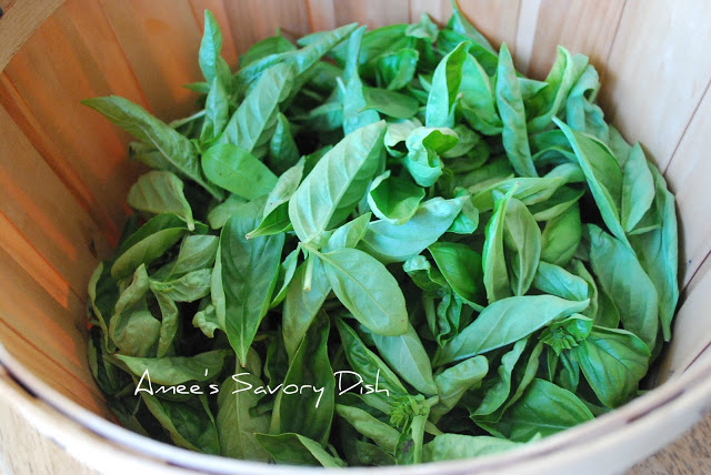 Basil for Homemade Pesto Sauce recipe