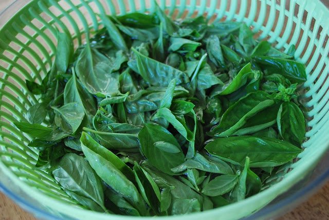 Fresh Basil for Homemade Pesto Sauce recipe