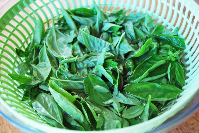 How to clean fresh basil for classic homemade pesto