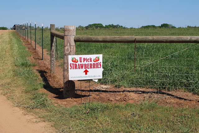 A sign for picking strawberries on the side of a dirt field