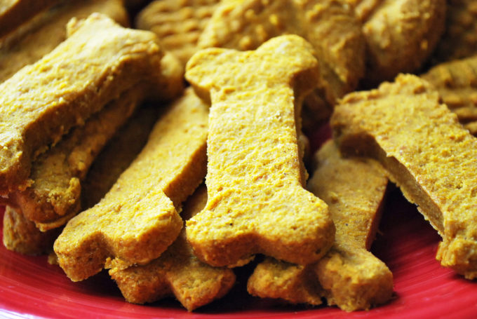 homemade pumpkin dog biscuits on a red plate