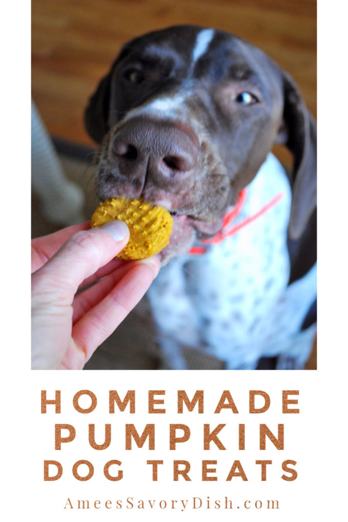 Homemade pumpkin dog treats and a dog