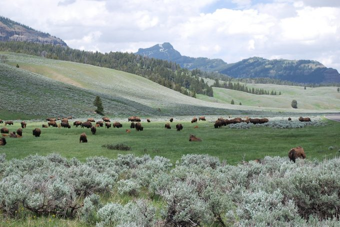Lamar Valley in Yellowstone