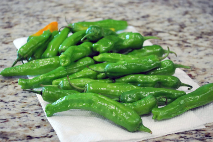 Fresh Shishito peppers washed and patted dry